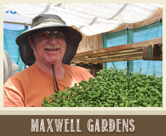 maxwell gardens