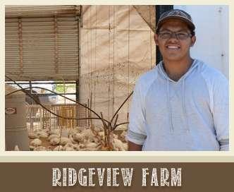 ridgeview farm