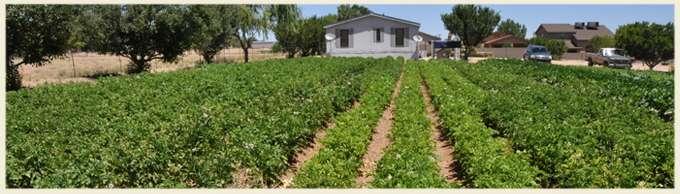 hernandez farm