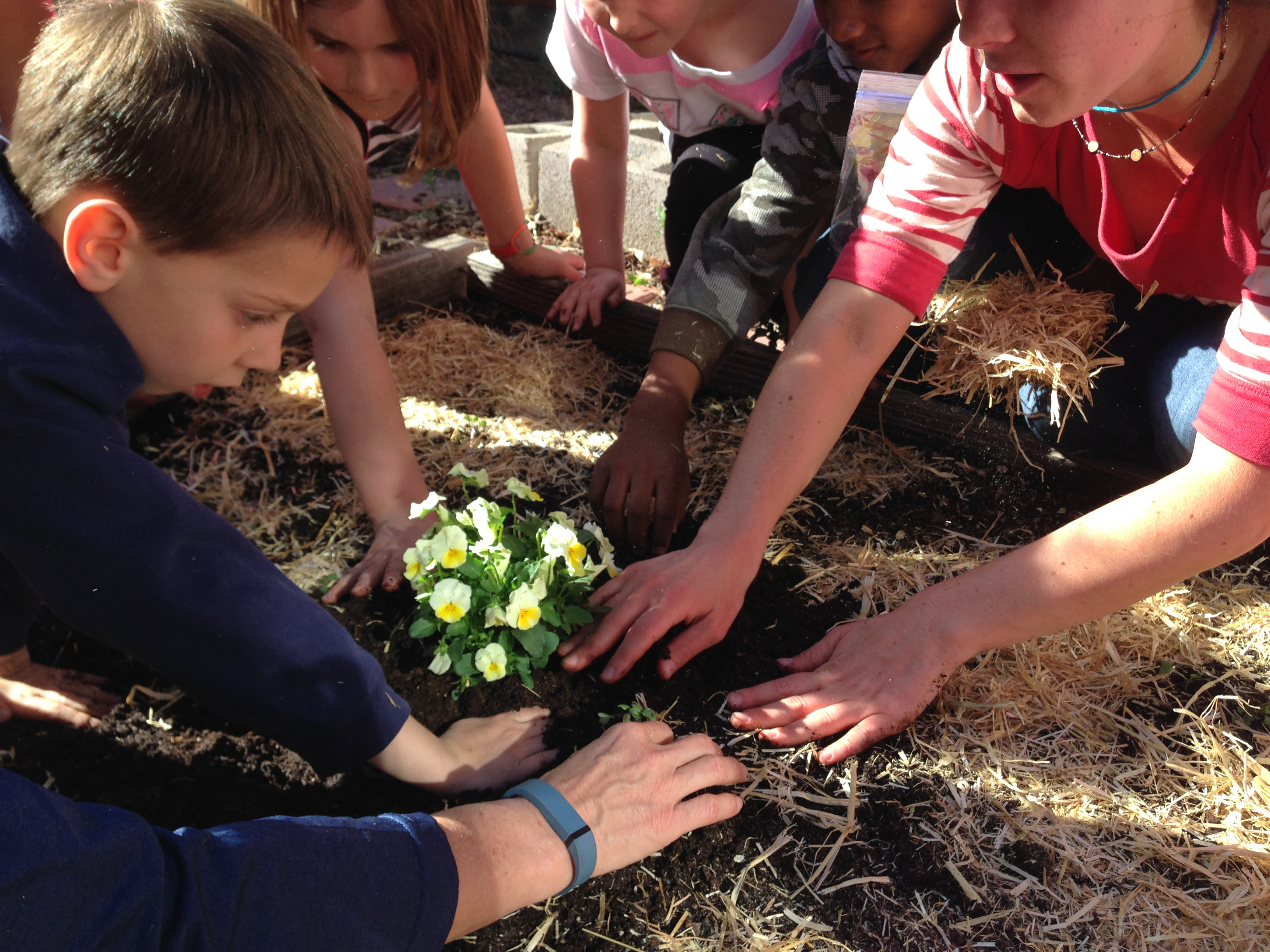 importance of agriculture club in school The value of school gardens gardening and agriculture concepts and skills of ready-to-print quotes for your school garden club bulletin board or to.